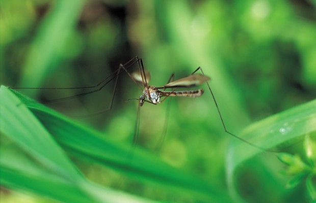 First Human West Nile Case Of 2013 Reported